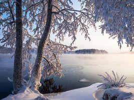 Фото бесплатно деревья, савонлинна, зима