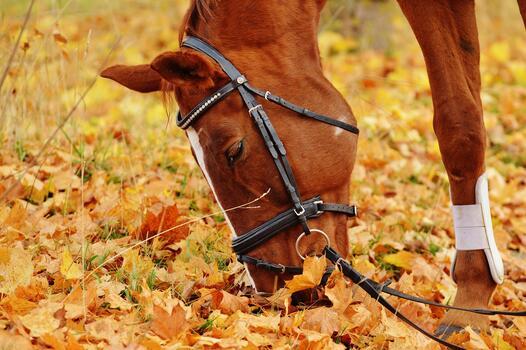 Photo free coupling, horse, animal