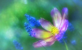 Фото бесплатно оригинал, цветы, цвет