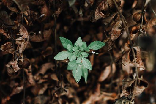 Фото бесплатно растение, ботаника, цветы