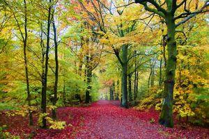 Заставки осень, парк, лес, деревья, дорога, пейзаж