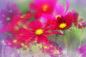 Фото бесплатно Космос, цветок, красивый