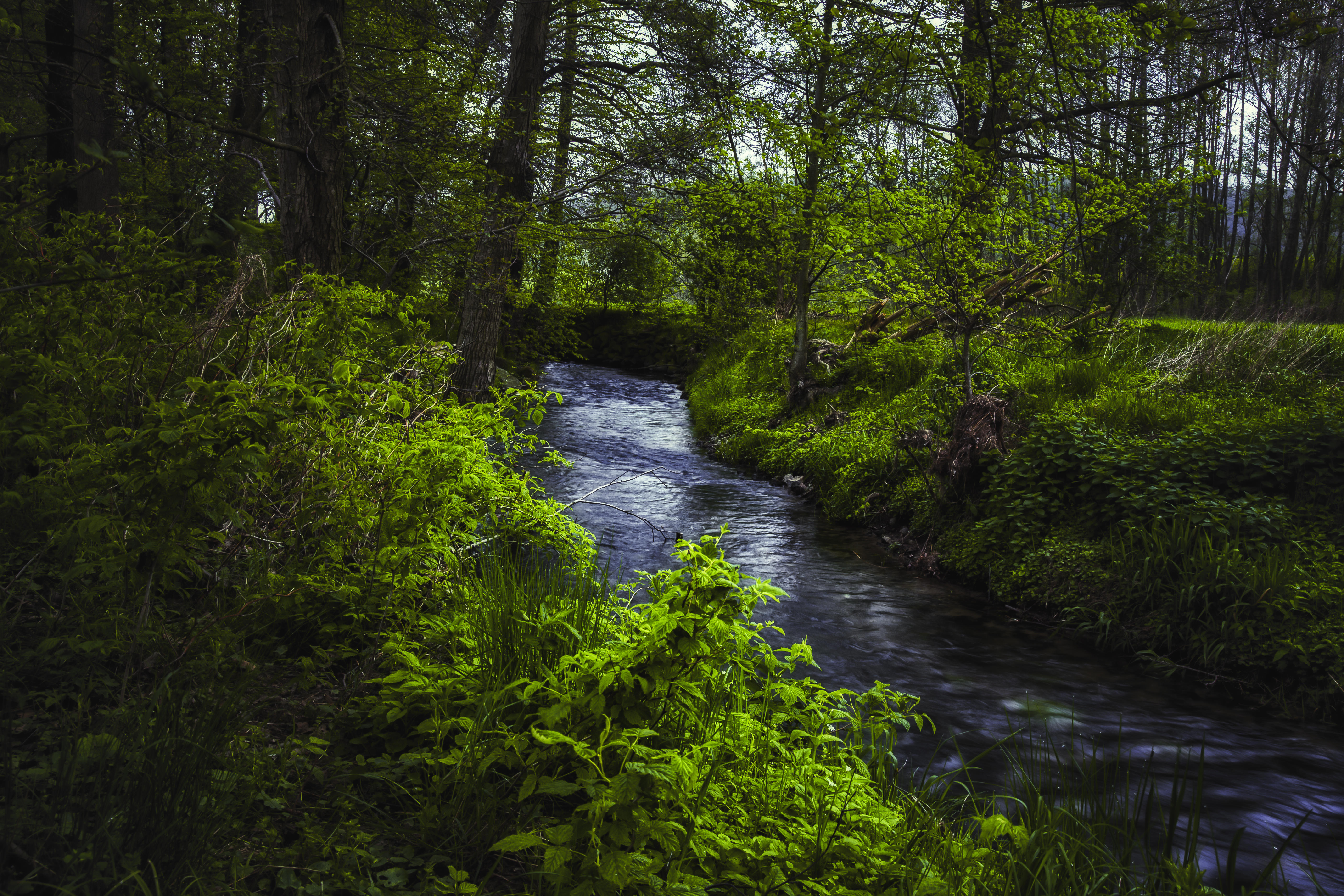 Обои лес, деревья, река, природа