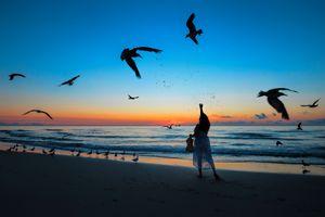 Чайки в Майами