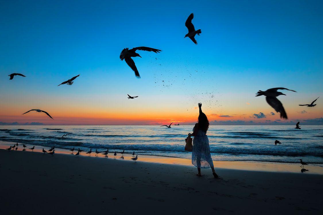 Чайки в Майами · бесплатное фото