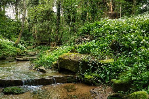 Photo free nature, Germany, creek