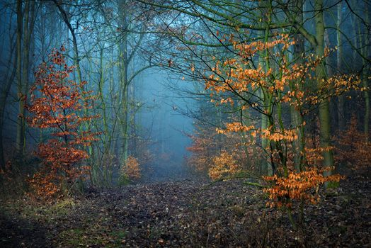 The picture autumn, fall, forest on your desktop
