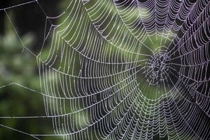 Photo free Spiderweb, drops, weaving