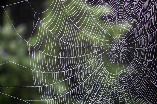 Обои Паутина,капли,ткачество,spiderweb,drops,weaving