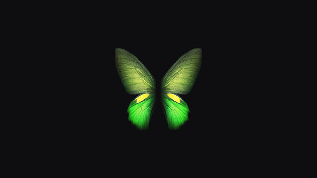 Photo free butterfly, Samsung, stock