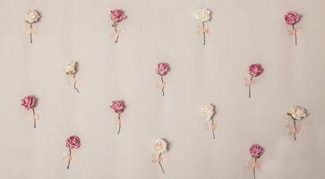Photo free roses, pink, decor