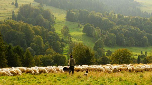 Фото бесплатно среда обитания, сельская местность, баранина