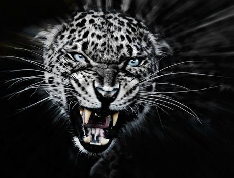 Photo free big cat, animal, teeth