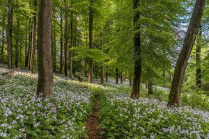 Бесплатные фото лес, деревья, цветы, тропинка, пейзаж