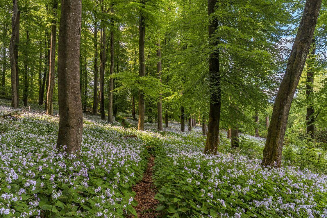 Фото бесплатно лес, деревья, цветы, тропинка, пейзаж, пейзажи