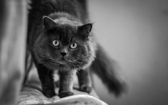 Фото бесплатно кошка, ходить, ходьба