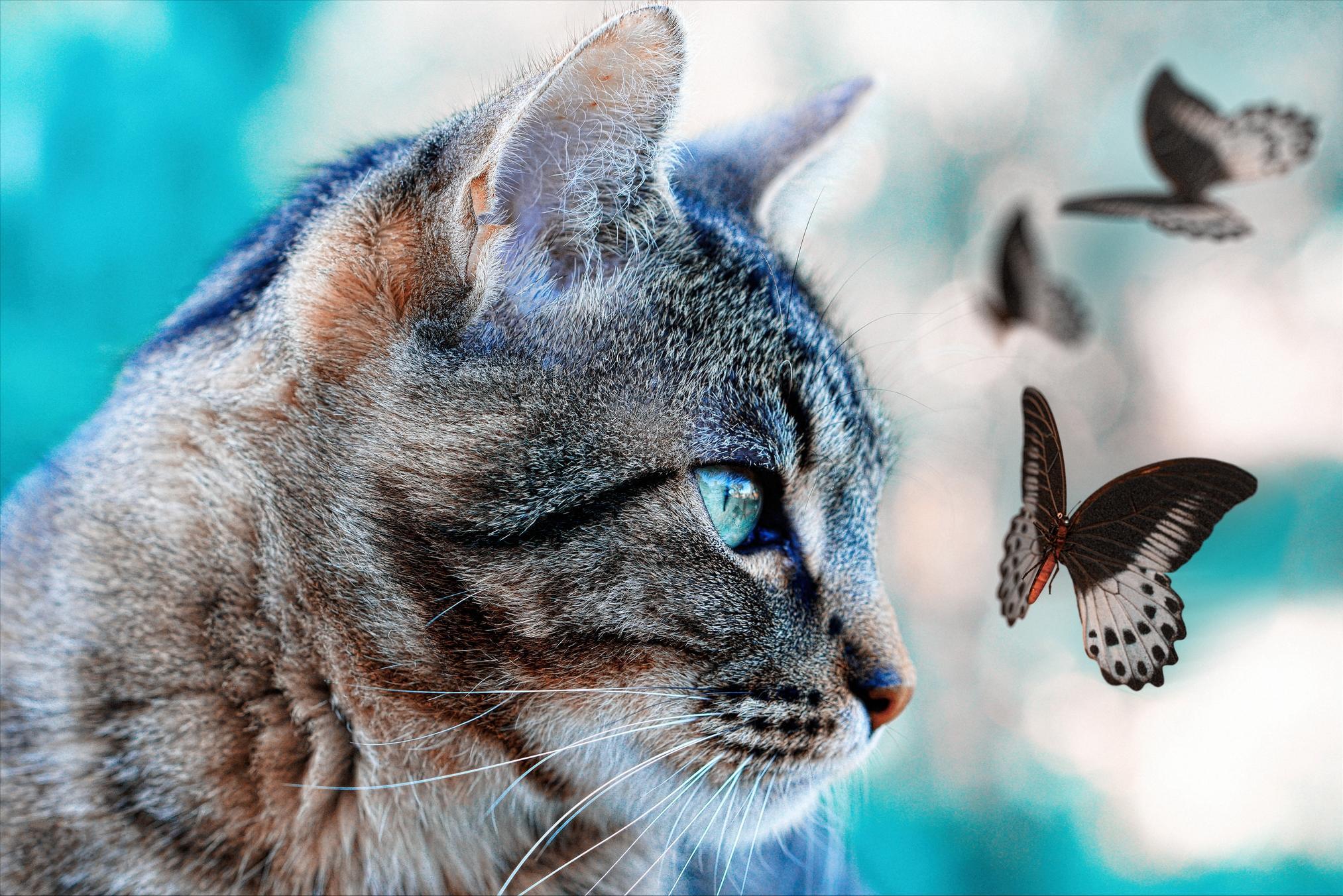 Обои кот, кошка, бабочки