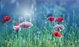 Фото бесплатно цветы, бутоны, природа