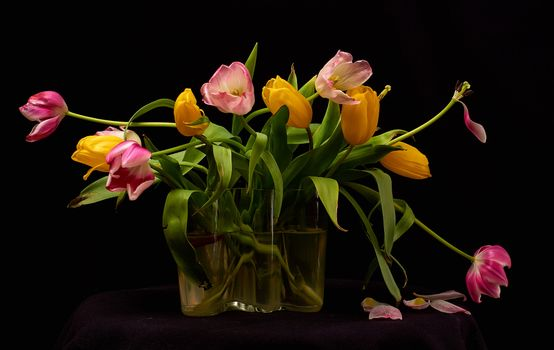 Hot photo of tulips, bouquet