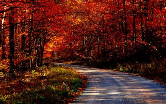 Фото бесплатно лес, пейзажи, дороги