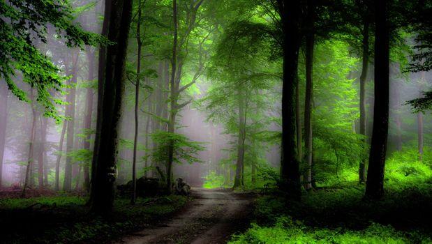 Фото бесплатно зеленый лес, растения, листва