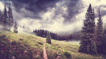 Фото бесплатно горный хребет, древесное растение, туман