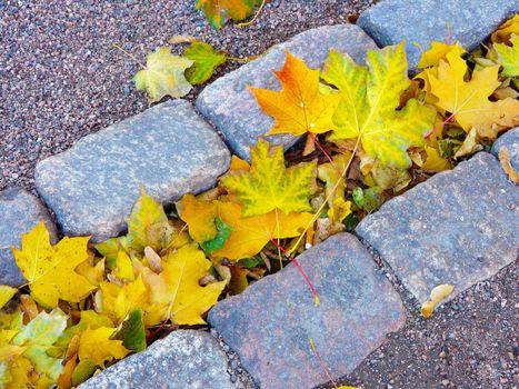 Photo free colorful, season, maple tree