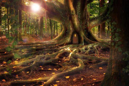 Фото бесплатно дерево, дом, корни