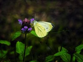 Photo free butterfly, flower, macro