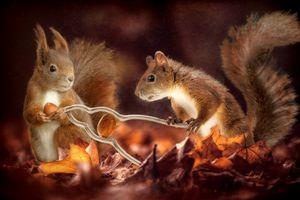 Белки и орехи · бесплатное фото