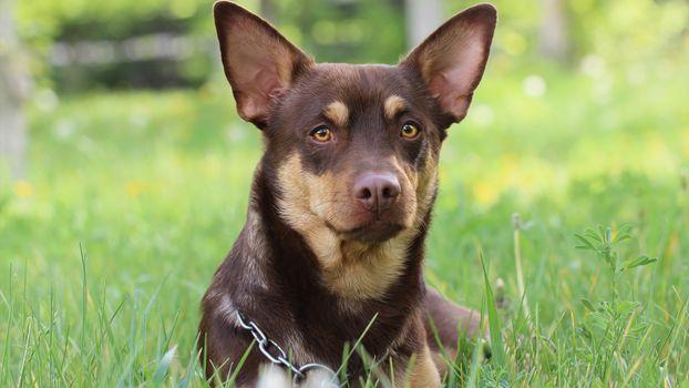 Фото бесплатно собака, просмотреть, трава