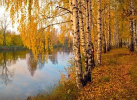 Photo free autumn, river, forest