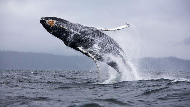 Фото бесплатно море, природа, кит