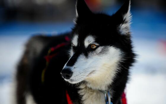 Photo free dogs, fur, breed of dog