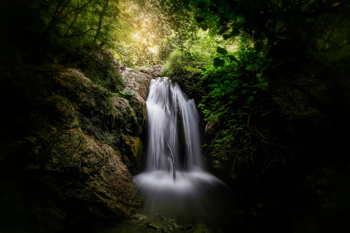 Free photo forest, trees, waterfall - to desktop