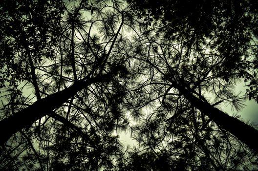 Фото бесплатно деревья, вид снизу, ветки