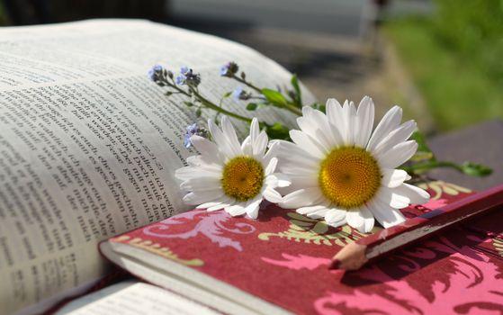 Photo free book, read, plant