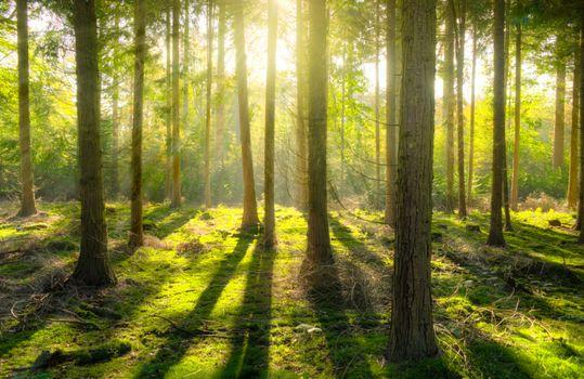 Photo free jungle, temperate coniferous forest, nature