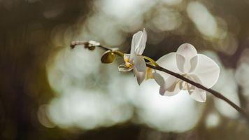 Бесплатные фото пейзаж,естественный,цветы,флора,цветок,макросъемка,крупным планом