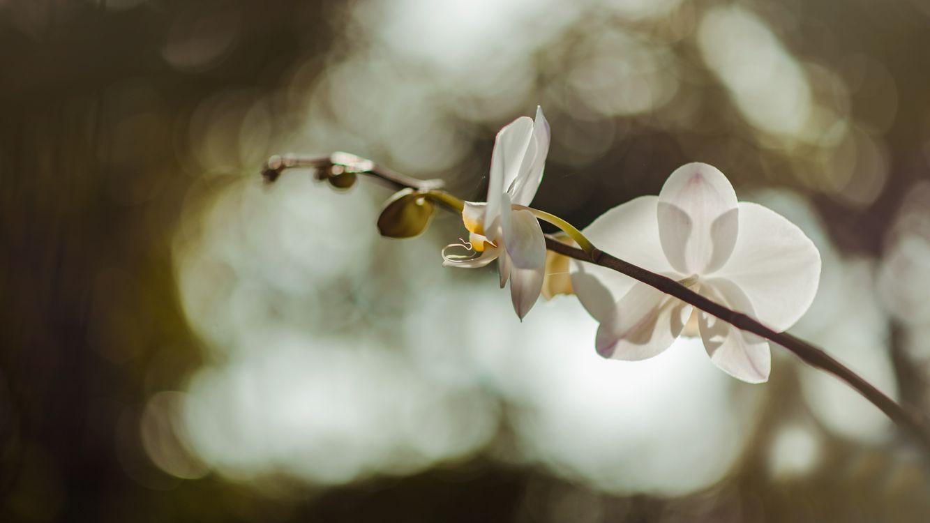 Фото бесплатно пейзаж, естественный, цветы - на рабочий стол