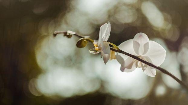 Фото бесплатно пейзаж, естественный, цветы