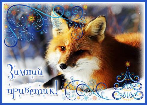 Postcard free winter greetings, fox, tex