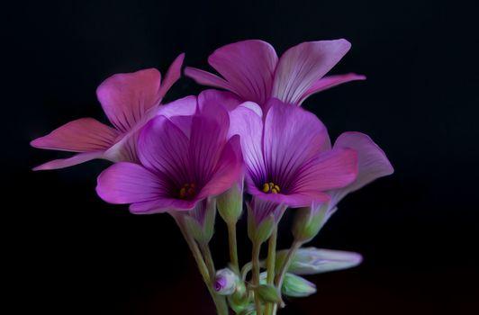 Заставка флора, букет