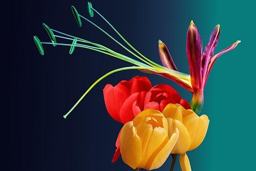 Фото бесплатно тюльпаны, цвет, красочный