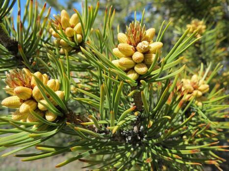 Фото бесплатно наземное растение, биом, рост