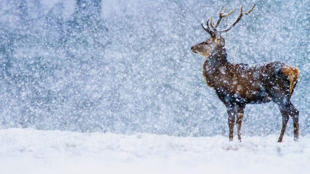 Photo free deer, winter, horns
