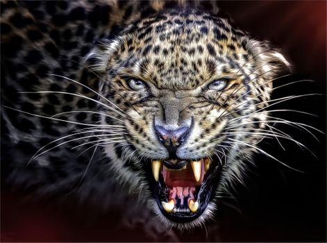 Photo free teeth, grin, animal