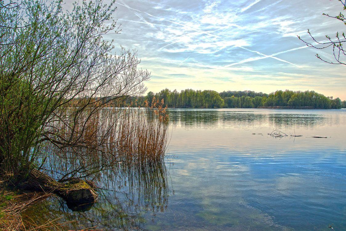 Фото бесплатно Сонненберг, пруд, рыболовный пруд, Hasselkampsee, Нижняя Саксония, Северная Германия, водоём, деревья, лес, небо, пейзаж, пейзажи