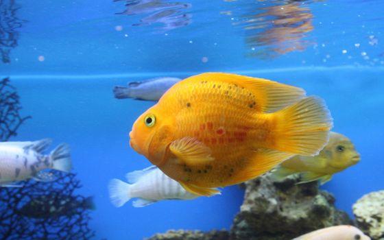 Photo free fish, underwater, coral reef