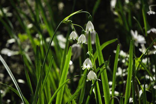 Фото бесплатно цветок, белый, трава
